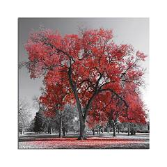 Pintdecor Big Red Tree Cadru cm. 50 x 50/100 x 100